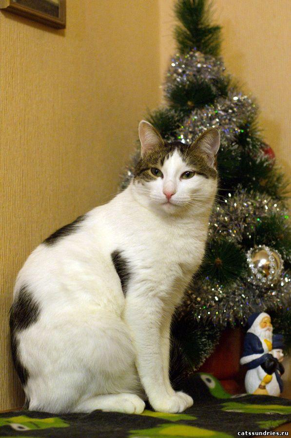 Знакомств сайт кошачьих